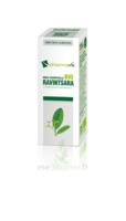 Huile essentielle Bio Ravintsara à BARCARÈS (LE)